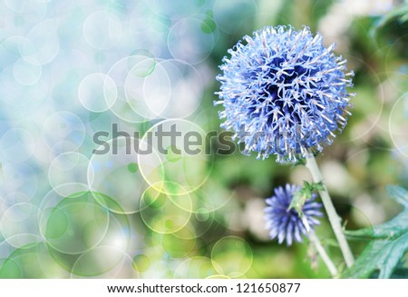 Onion (Allium sativum ) bokeh background - stock photo