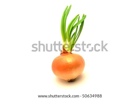 Onion isolated on a white - stock photo