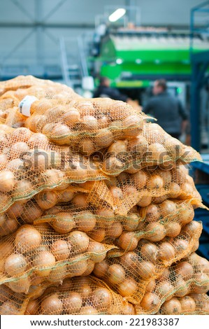 Onion packed in the hall ready for shipment - stock photo