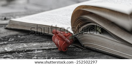 open book on wood desk with rose - letterbox look old noisy picture - stock photo