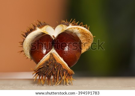 Open chestnut in the form of a face looking at the viewer, Closeup - stock photo