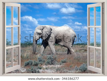 Open window view to african elephant in savannah - stock photo