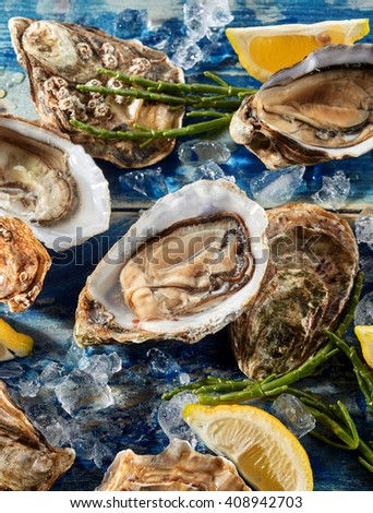Opened fresh raw marine oysters with asparagus and crushed ice on a blue background for a tasty gourmet appetizer, high angle close up view - stock photo