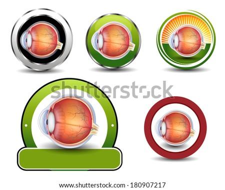 Ophthalmology symbols collection, Human eye cross section. - stock photo