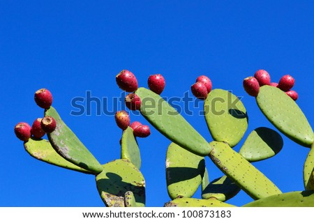 Opuntia with ripe fruits - stock photo