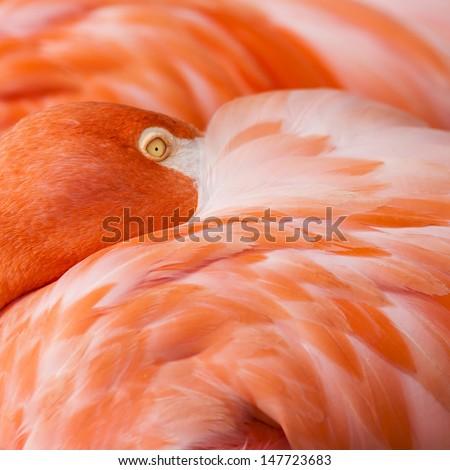 Orange Abstract Background - Flamingo Detail - stock photo
