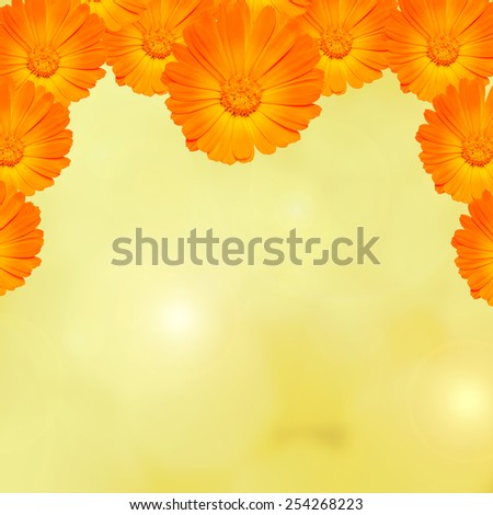 Orange and yellow Calendula officinalis flowers (pot marigold, ruddles, common marigold, garden marigold), texture lights background. - stock photo