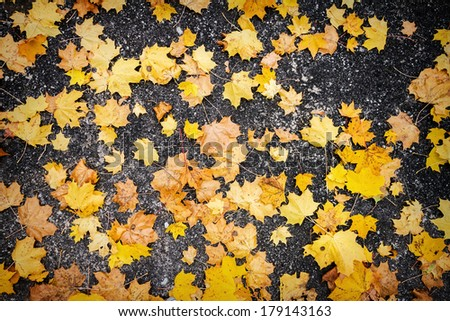 Orange autumn leaves on asphalt - stock photo