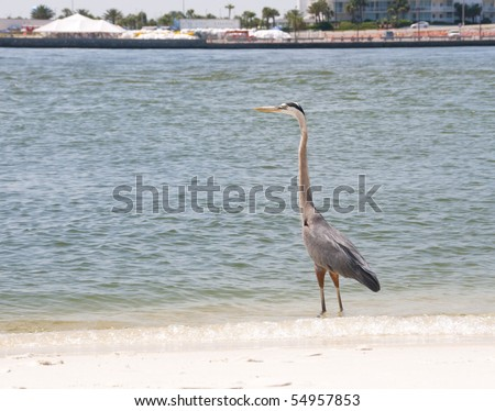 ORANGE BEACH, AL - JUNE 10:  A blue heron stands on the seashore of Perdido Pass, AL on June 10, 2010 as oil collection continues (BP staging area in background). - stock photo