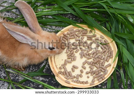 Orange brown rabbit is eating rabbit feed and grass top view. Professional dry pet food spread out in a plate with green grass - stock photo