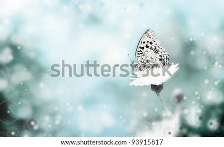 Orange butterfly on a flower - stock photo