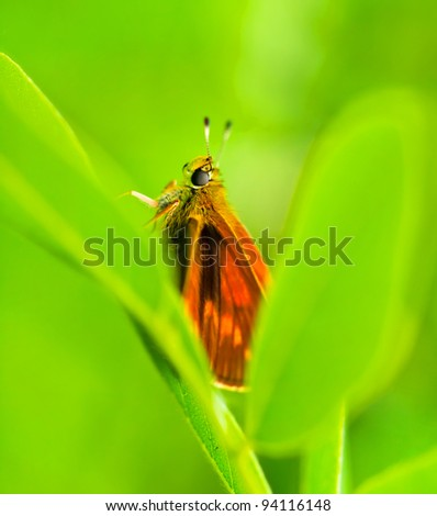Orange butterfly on grass with green background blur . Shallow depth of field. Selective focus. Art - artistic macro. - stock photo