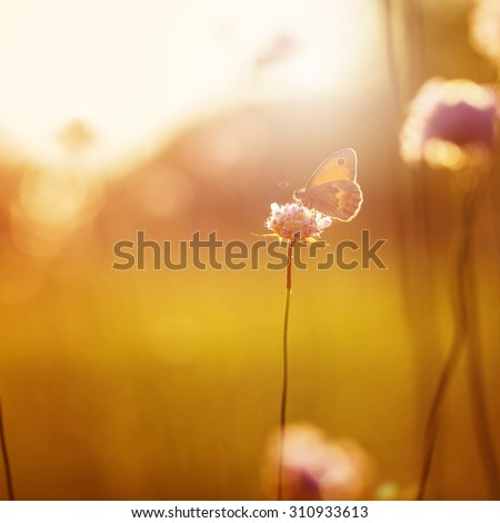 orange butterfly seating on wild pink flower in field at evening sunshine. Nature outdoor autumn vintage photo  - stock photo