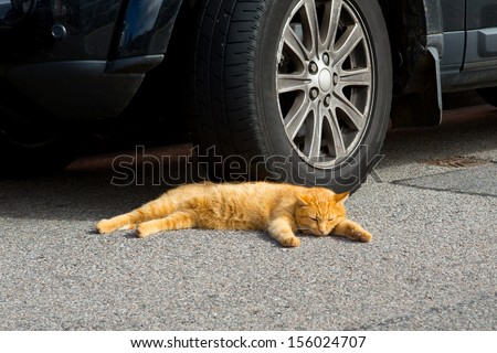 Orange cat asleep - stock photo