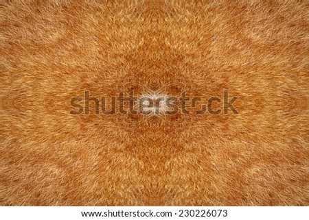 Orange cat fur kaleidoscope pattern - stock photo