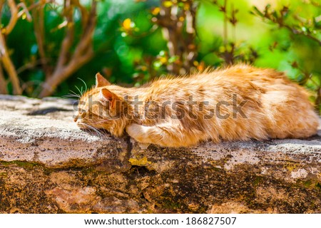 Orange cat sleeping on a stone wall - stock photo