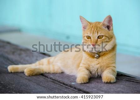 Orange cat sleeping on a wooden floor.  - stock photo