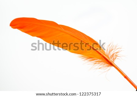 Orange duck feather close up - stock photo