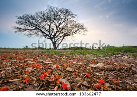 orange flower fall and lonly tree - stock photo