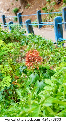 Orange Flower on Green Background - stock photo