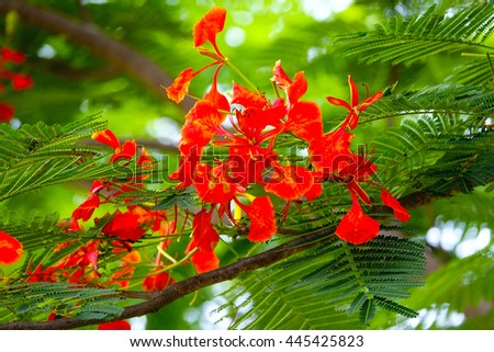 orange flower on green leaf background,select focus with shallow depth of field:ideal use for background. - stock photo