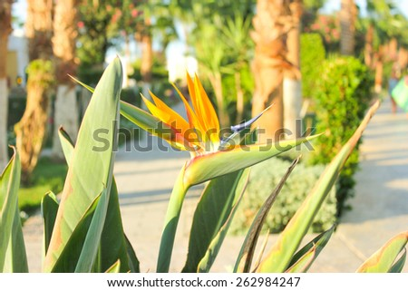 Orange Flowers at sun light. - stock photo
