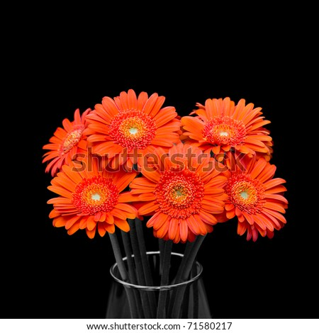 Orange gerbera flower in vase - stock photo