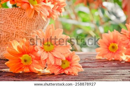 Orange gerbera flower on wooden table  with bokeh background vintage retro pastel tones. - stock photo