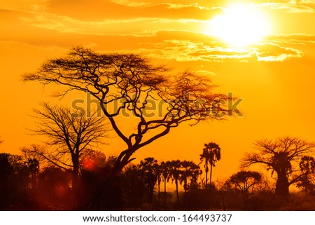 Orange glow of an african sunset with tree in front - stock photo
