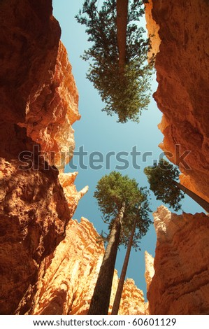 orange hoodoo canyon and tree trunks - stock photo