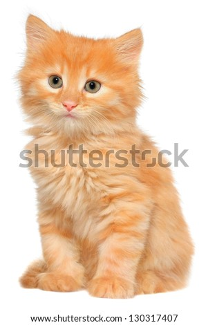 Orange kitten sitting isolated on white background. - stock photo