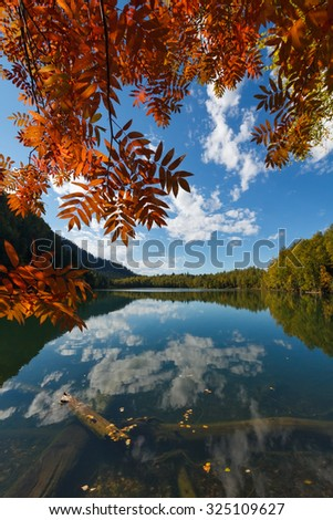 Orange leaves of a tree with lake and blue sky - stock photo