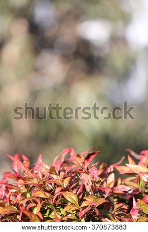 Orange Leaves with soft focus mountain background - stock photo
