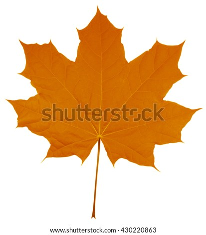 Orange Maple Leaf isolated on white background. Clipping path included. - stock photo