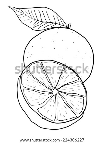 Orange one and a half line art - stock photo