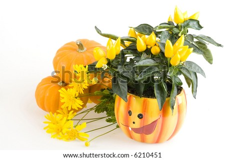 Orange Pumpkins for Haloween with flowers on White Background - stock photo