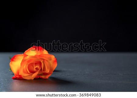 Orange Rose On Black Stone, Black Background. - stock photo