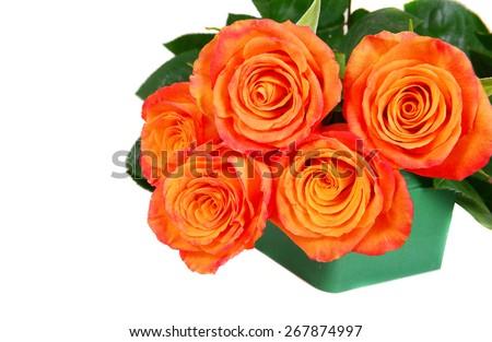 Orange roses isolated on white background  - stock photo