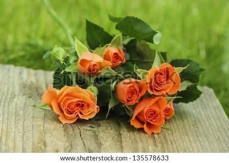 Orange roses on wooden surface in fresh spring garden - stock photo