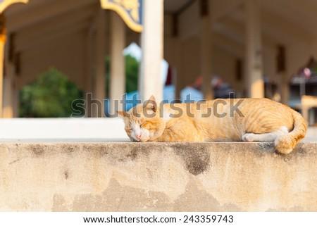 orange stripe cat sleeping on concrete floor - stock photo