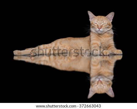 orange striped cat crouch and sleep isolated on black background with mirror and copy space - stock photo
