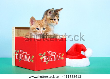 Orange tabby and calico tortie tabby kittens in a red Christmas box next to small santa hat on green table with light blue background. - stock photo
