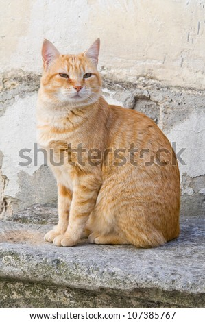 Orange tabby cat on stair-step. - stock photo