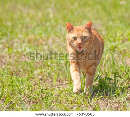 Orange tabby cat running towards viewer in green grass - stock photo