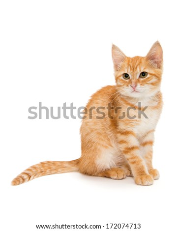 Orange tabby kitten, isolated on white background - stock photo