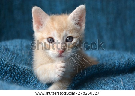 Orange tabby kitten, paw up looking at camera - stock photo