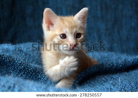 Orange tabby kitten, paw up looking sideways - stock photo