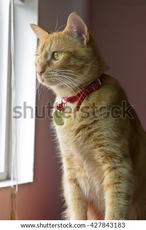 Orange tabby sitting looking out of window - stock photo