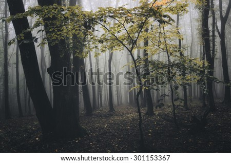 orange tree in forest in autumn - stock photo