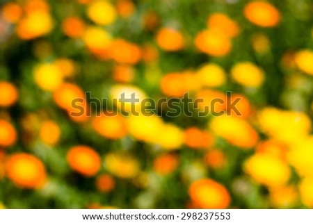orange, yellow flowers on green defocused bokeh abstract background - stock photo